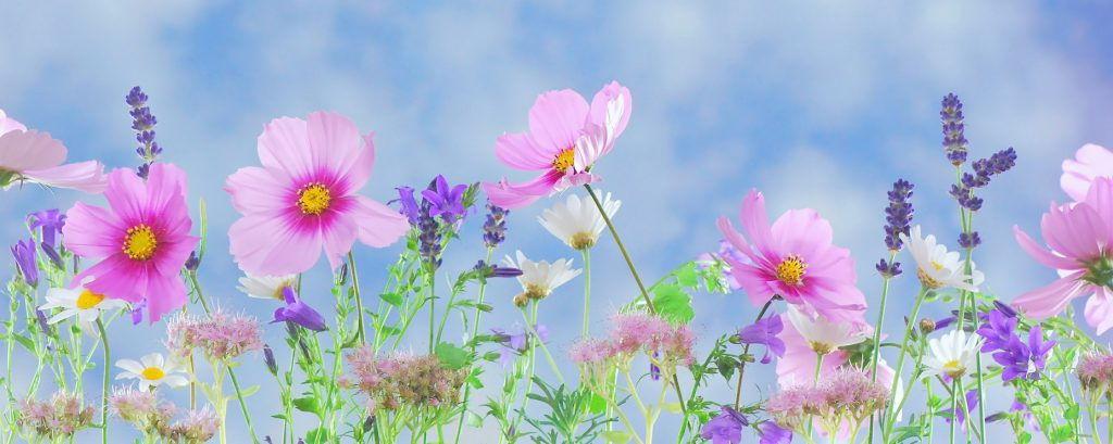 bannière fleurie